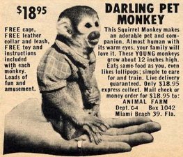darling-per-monkey