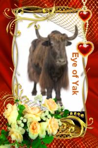 eye-of-yak-award