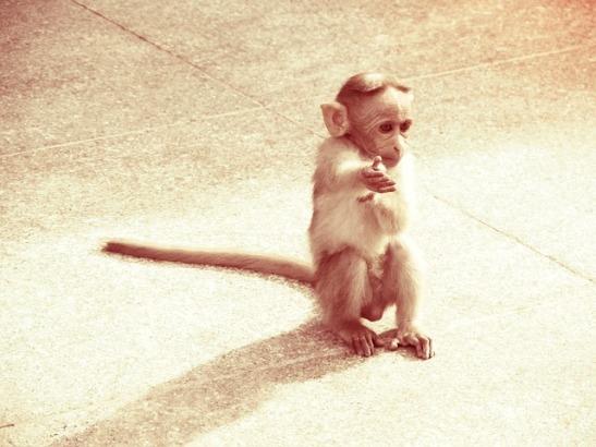 monkey-454813_640