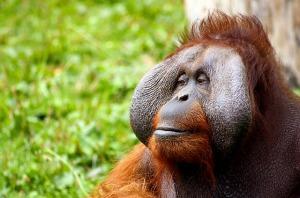 monkey-428032_640