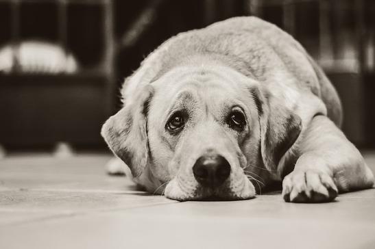 dog-1126025_640